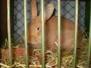 Prodejní výstava králíků Rájec
